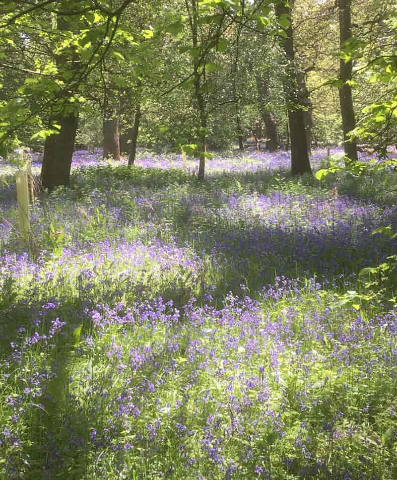 Harcourt Arboretum in Oxfordshire - Forest bathing for architects a blog by Sophie Lacey